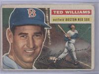 Ted Williams (Gray Back) [Poor]