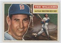 Ted Williams (Gray Back)