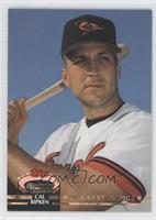 Members Choice - Cal Ripken Jr.