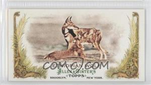 2011 Topps Allen & Ginter's Animals in Peril Minis #AP10 - Ethiopian Wolf