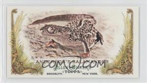 2011 Topps Allen & Ginter's Animals in Peril Minis #AP27 - Anderson's Salamander