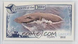 2012 Topps Allen & Ginter's - Giants of the Deep Minis #GD-15 - Bryde's Whale