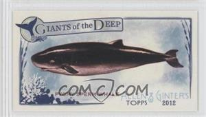2012 Topps Allen & Ginter's Giants of the Deep Minis #GD-11 - Pygmy Sperm Whale
