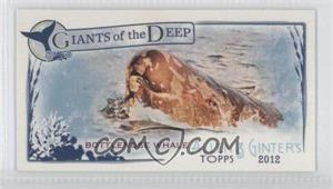 2012 Topps Allen & Ginter's Giants of the Deep Minis #GD-14 - Bottlenose Whale