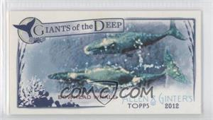 2012 Topps Allen & Ginter's Giants of the Deep Minis #GD-6 - Bowhead Whale