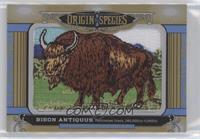 Tier 1 - Bison Antiquus