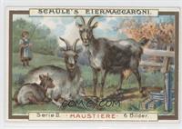 Schule's Eiermaccaroni (Haustiere)
