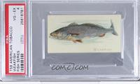 Weakfish [PSA 4]