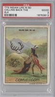 Calling Back The Elk [PSA 2]