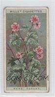 Herb Robert [Good to VG‑EX]