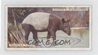 Malayan Tapir [Good to VG‑EX]