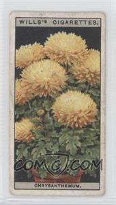 1925 Wills Flower Culture in Pots Tobacco [Base] #16 - Dwarf Chrysanthemum [Good to VG‑EX]