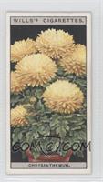 Dwarf Chrysanthemum [GoodtoVG‑EX]