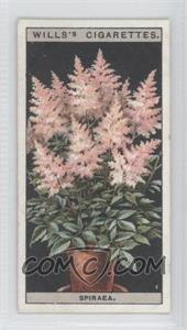 1925 Wills Flower Culture in Pots Tobacco [Base] #45 - Spiraea