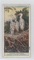 Young Herons Await Their Parent [GoodtoVG‑EX]