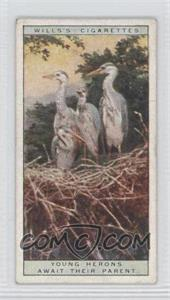 1925 Wills Life in the Tree Tops Tobacco [Base] #17 - Young Herons Await Their Parent [Good to VG‑EX]