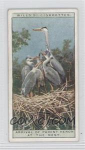 1925 Wills Life in the Tree Tops Tobacco [Base] #19 - Arrival of Parent Heron at the Nest [GoodtoVG‑EX]