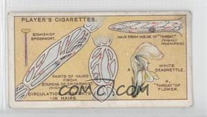 1929 Player's Hidden Beauties Tobacco [Base] #6 - Circulation Currents-in Hairs. [GoodtoVG‑EX]