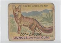 South African Fox [Poor to Fair]