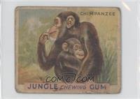 Chimpanzee [Poor]