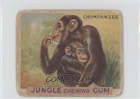 Chimpanzee [PoortoFair]