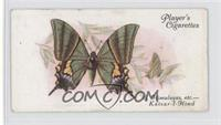 Foreign Butterflies: East Himalayas, &c., The Kaisar-I-Hind