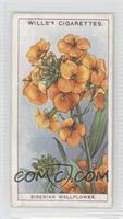 Siberian Wallflower [GoodtoVG‑EX]