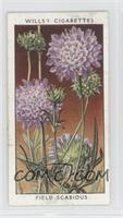 Field Scabious [Good to VG‑EX]