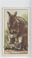 Wallaby [GoodtoVG‑EX]