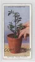 Potting Young Plants