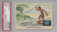 Seminole Hunting Aligator [PSA7.5]