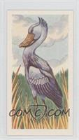 Shoebill or Whale-Head