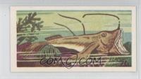 Long-Finned Angler Fish