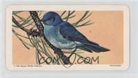 Mounted Bluebird