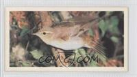 Wood Warbler [Good to VG‑EX]