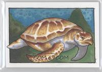 James Bukauskas (Sea Turtle) /1