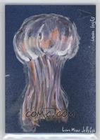 Laura Inglis (Lion Mane Jellyfish) /1