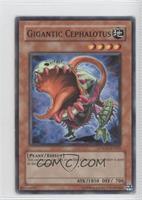 Gigantic Cephalotus