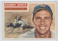Sammy White (Gray Back)