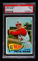 Pete Rose [PSA 7 NM]