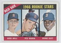 Red Sox Rookies (Guido Grilli, Pete Magrini, George Scott)