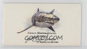 Great-White-Shark.jpg?id=909cafac-060e-434a-900f-c6960e9f9aec&size=original&side=front&.jpg