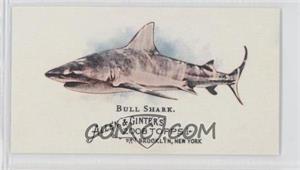 2008 Topps Allen & Ginter's - The World's Deadliest Sharks Mini #WDS3 - Bull Shark