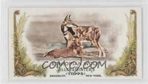 2011 Topps Allen & Ginter's - Animals in Peril Minis #AP10 - Ethiopian Wolf