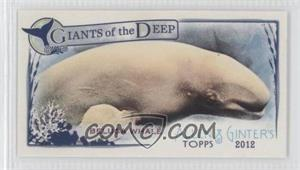 2012 Topps Allen & Ginter's - Giants of the Deep Minis #GD-5 - Beluga Whale