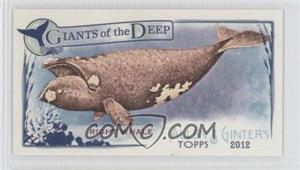 2012 Topps Allen & Ginter's - Giants of the Deep Minis #GD-7 - Right Whale