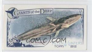 2012 Topps Allen & Ginter's - Giants of the Deep Minis #GD-8 - Fin Whale