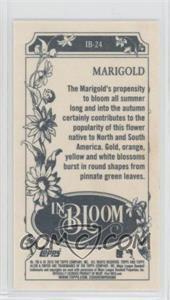Marigold.jpg?id=66432033-73dd-4d6f-8b78-a1edbb05e9ff&size=original&side=back&.jpg
