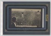 Immense Yield of Wheat, Edmonton