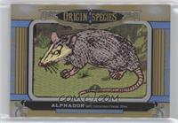 Tier 1 - Alphadon